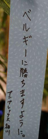DSC04470.jpg